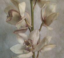 Orchid by Sarah Jarrett