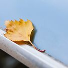 Leaf on the roof of a Trabant, by jipvankuijk