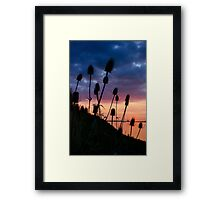 Sunset, Distels, Framed Print