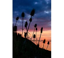 Sunset, Distels, Photographic Print