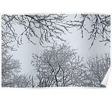 Snow and Trees Poster
