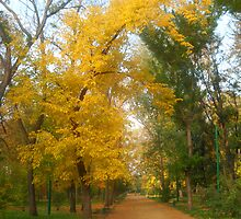 Autumn in The Park by Vitta