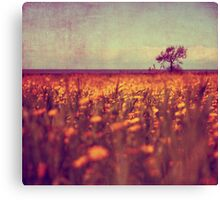 lying in a field of daisies Canvas Print