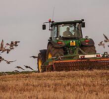 Gulls following a tractor by Judi Lion