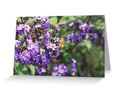 Bee Pollinating Purple Flower Greeting Card