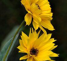 Pretty Twins In Yellow by lynn carter