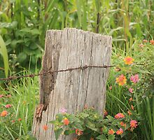 Fence Post and Barbed Wire by rhamm