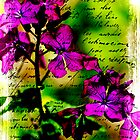 Luminous Lunaria - Money Plant by MotherNature2
