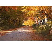 Fall colors over a Michigan back road Photographic Print