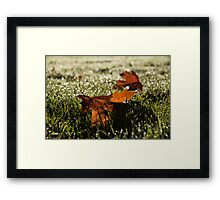 Essence of Autumn Framed Print