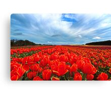 Tulip sky Canvas Print