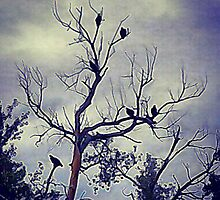 Eight Vultures Flock One Tree by Kim Taylor