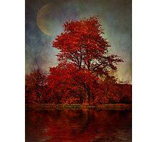 Lunar Companion Photographic Print