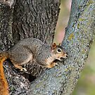Squirrelly Girly by Keala