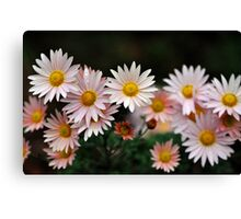 Touch Of Pink Daisy Mums I Canvas Print