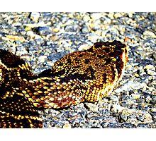 rattlesnake Photographic Print
