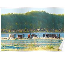 Grazing By A Lake? Poster