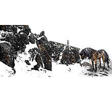 Snow Horse Photographic Print