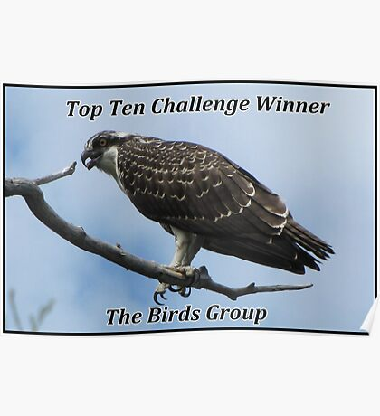 The Birds Top Ten Challenge Winner Banner Poster