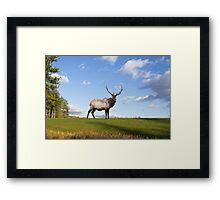 Elk on Hillside Framed Print