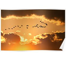 Canadian Geese Flying at Sunset Poster