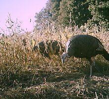 Turkey on the farm  by timedude187