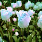 Blue Blossoms by Dani LaBerge