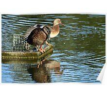 Ducks On The Lake At Mangerton Mill, Dorset UK Poster