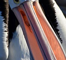 Pelican Extreme close up by John Harvey