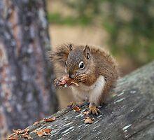 Jasper Squirrel by Ron Finkel