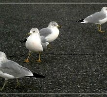 seagulls by arteology