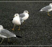seagulls by arteology