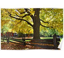 Autumn by a fence Poster