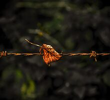 Leaf on Wire by Tony Shaw