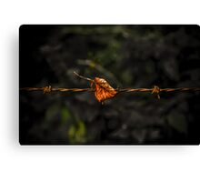 Leaf on Wire Canvas Print