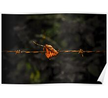 Leaf on Wire Poster