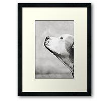 Spud #2 Framed Print