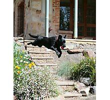 Super Dog Photographic Print