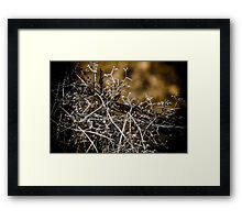 Wire and Weed Framed Print