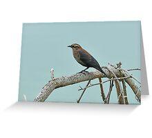Rusty Blackbird - Uncommon & Declining Greeting Card
