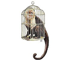 Monkey in Cage Photographic Print