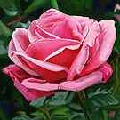 Pink Rose by marksatchwillart