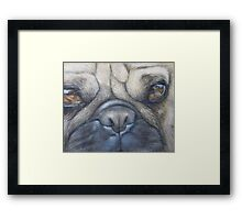 Pug face Framed Print