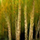 Artscape Birchwood by Imi Koetz