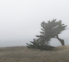 Cypress tree in the fog by David Chesluk