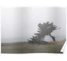 Cypress tree in the fog Poster