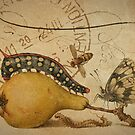 Vintage Botanical & French Ephemera - Distressed Texture Notecard - Botanical Art by traciv