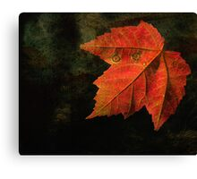 Autumn Eyes  Canvas Print