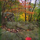 On Allen's Knob at Shallenberger State Nature Preserve by TrendleEllwood