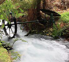 Bush stream generator by Duncan Cunningham